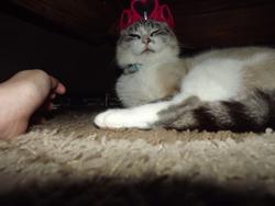 Roukinia, chat