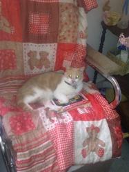 Rouky , chat Européen