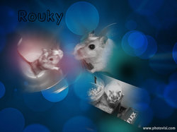 Rouky, rongeur Gerbille