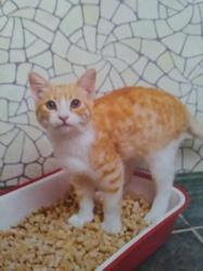 Rouky, chat Gouttière