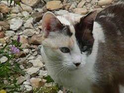 Rouna, chat Gouttière