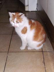 Rourou , chat Gouttière
