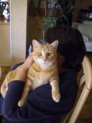 Rousse, chat Gouttière