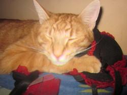 Routmout, chat Gouttière