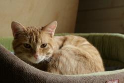 Rouxroux, chat