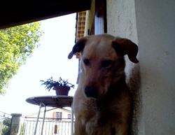 Rox, chien