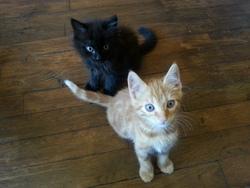 Rox Et Rouky, chat Gouttière