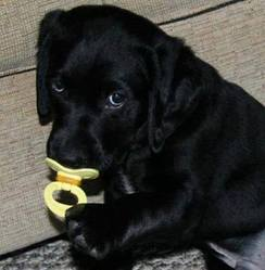 Roxan, chien