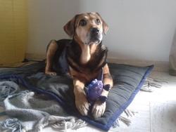 Roxane, chien