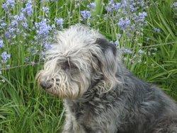 Roxanne, chien