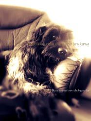 Roxi, chien