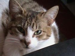 Roxie, chat