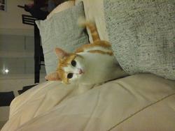 Roxie, chat Gouttière