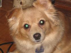 Roxy , chien