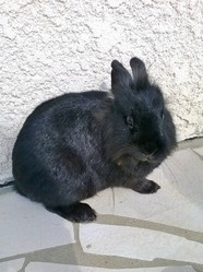 Roxy, rongeur Lapin