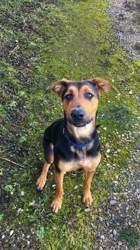 Roxy, rongeur Hamster