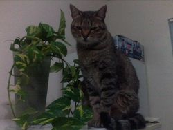 Roxy, chat