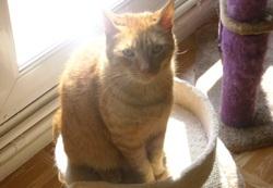 Roxy, chat Gouttière
