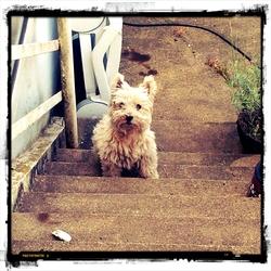 Roxy, chien