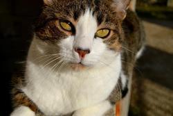 Rubbis, chat Gouttière