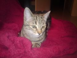 Rubis, chat Gouttière