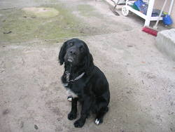 Ruby, chien