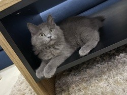 Ruby , chien Dogue argentin
