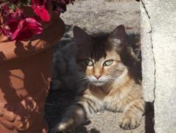 Ruby, chat Gouttière