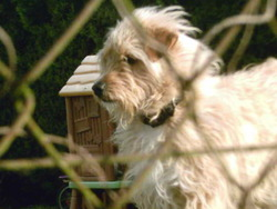 Rudy, chien