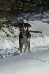 Rufus, chien