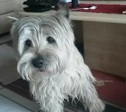 Rusty, chien