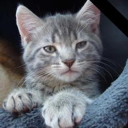 Ryby Décédé, chat Gouttière
