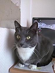 Saba, chat