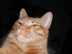 Sabbia, chat Gouttière