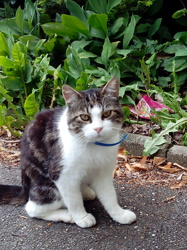 Sacha, chat Gouttière