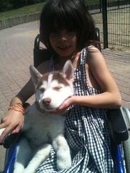 Sacha, chien Husky sibérien