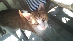 Sachat, chat Gouttière