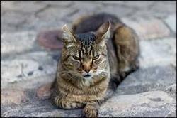 Sachets, chat Gouttière