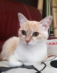 Sahelle, chat