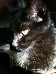 Salem, chat Gouttière