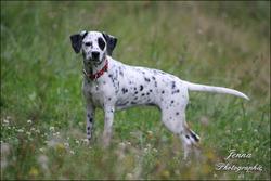 Salem, chien