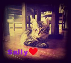 Sally, chat
