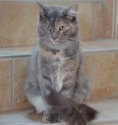 Sally, chat Européen