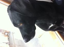 Sally, chien