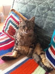 Salsa, chat Gouttière