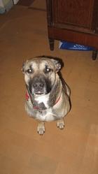 Sam, chien