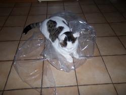 Samael, chat Gouttière