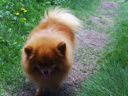 Samia, chien