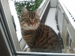 Sammy, chat Gouttière