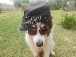 Sammy, chien Border Collie
